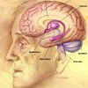 Does low testosterone in men lead to difficulties with concentration and memory ?